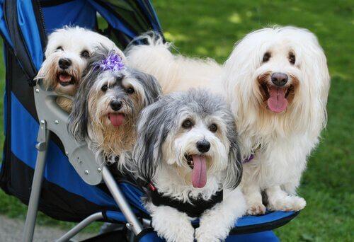 De 3 farorna med att förmänskliga hundar
