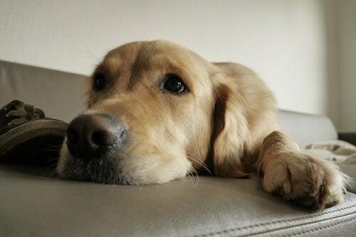Hur man tillfredsställer hundars naturliga instinkter hemma