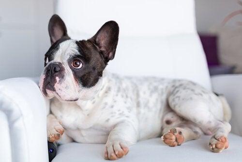 Vad vill hundar se på TV och hur fungerar deras syn?
