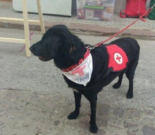 En illa behandlad hund arbetar nu som terapihund