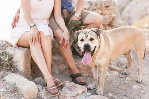 5 anledningar till att det är bra att leva med hundar