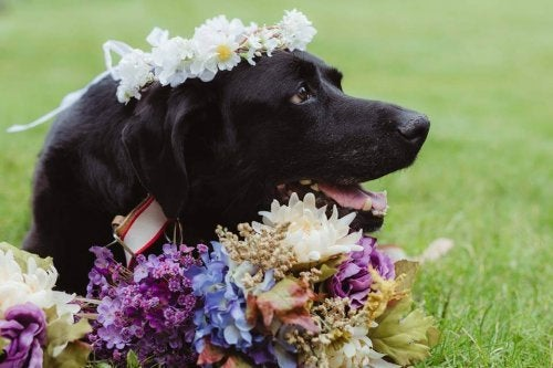 En hund med hjärntumör dör efter att ha gått på sin ägares bröllop