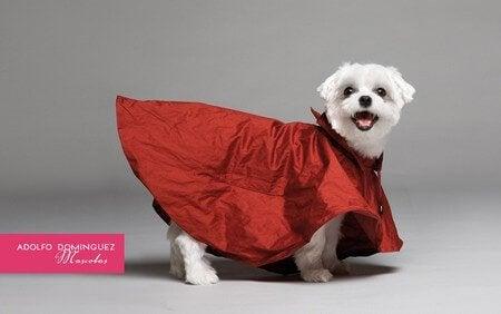 Hund med röd klädsel.