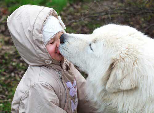 Kan du låta hunden slicka ditt ansikte?