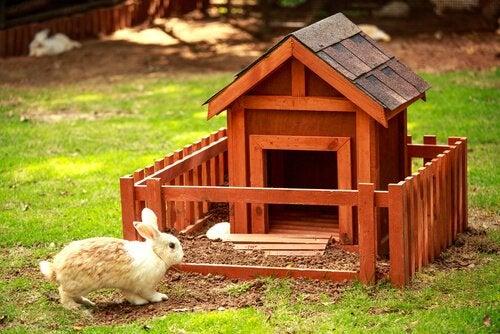 Kanin och hus.
