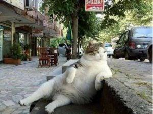 Katt som sitter vid vägkanten.