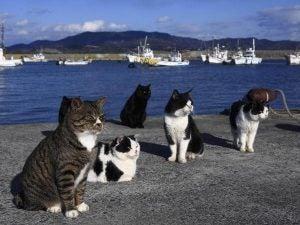 Katter vid havet.