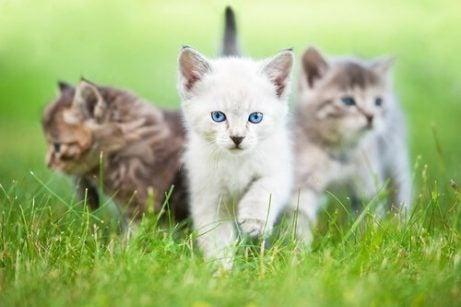 Tre katter i gräset.