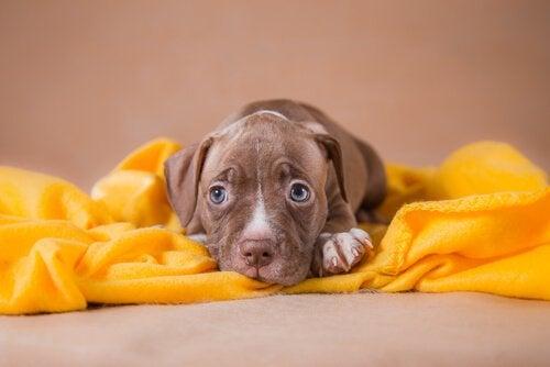 Var inte blyg! Anledningar att adoptera ett husdjur