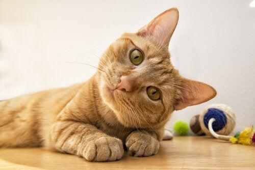 6 ansiktsuttryck hos katter och vad de betyder