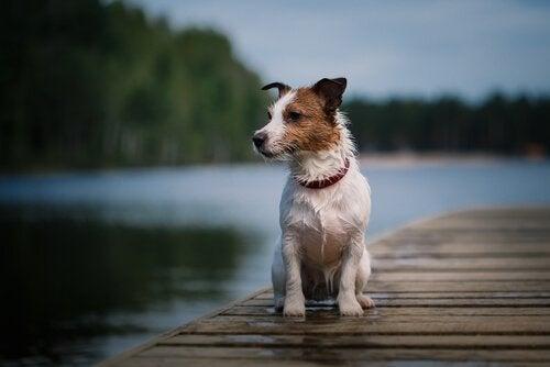 Den berömda hunden Pancho går bort vid 16 års ålder
