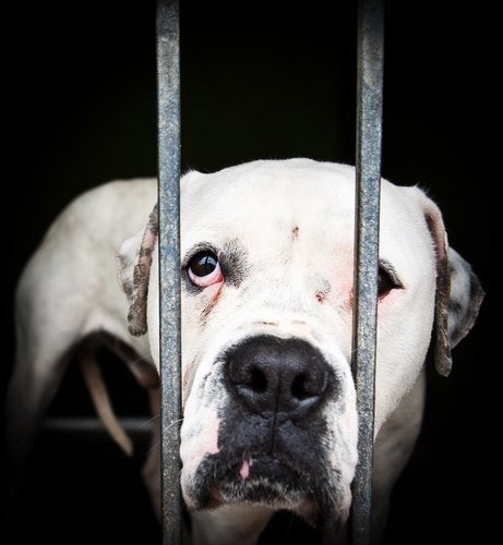 Djur bakom galler