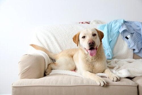 Glad hund på soffan