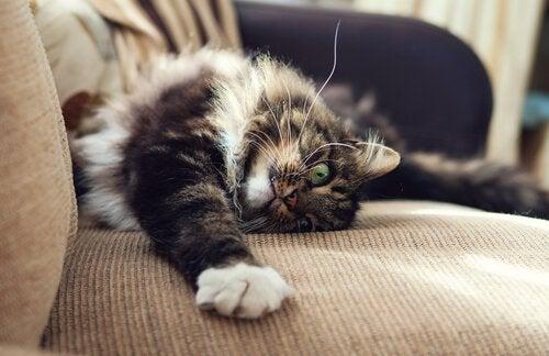 Hur man undviker att katten vässar klorna på möbler