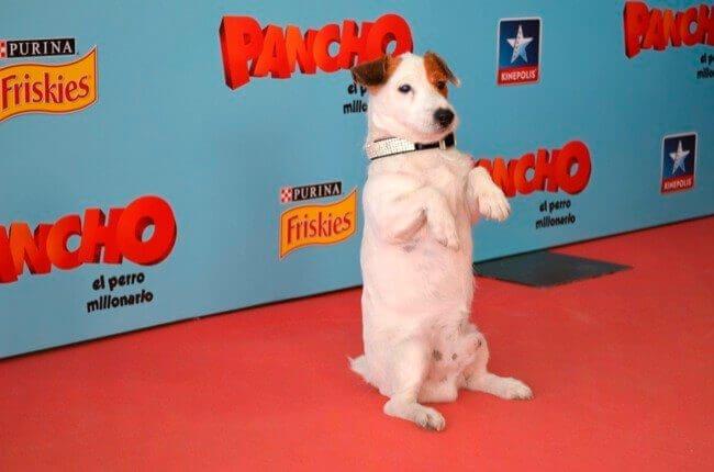En hyllning till de mest berömda hundarna på film och TV
