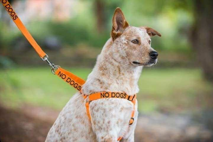 Hund med orange färg på halsband och koppel