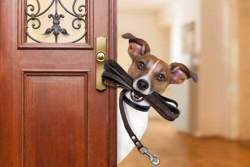 Vill du tjäna lite extra pengar? Bli hundpromenerare!