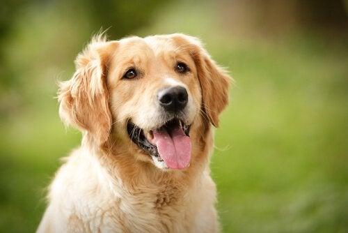 Vad kan hundar säga med sitt ansiktsuttryck?