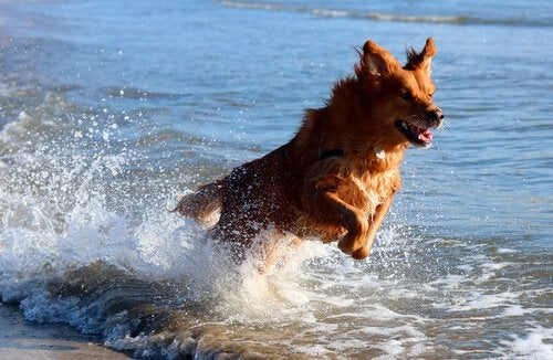 Ta din hund till stranden: Ha en bra dag med din vän