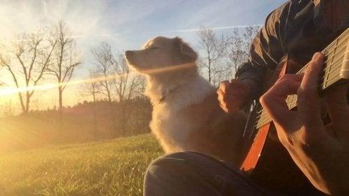 Hund som sitter i solen med sin ägare.