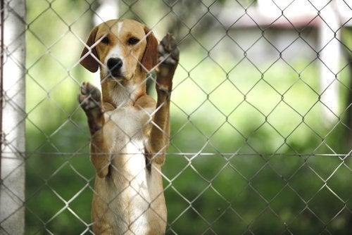 Hund som tittar vid stängsel.