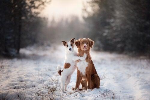 OBS! Tvinga aldrig din hund att gå på bakbenen