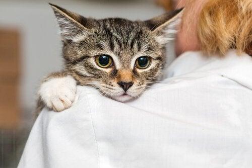 En katt vilar på en kvinnas axel