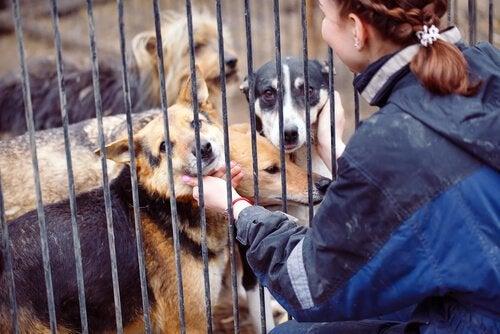 Övergivna hundar väntar på att adopteras