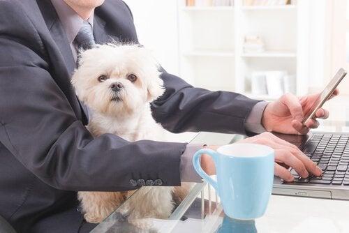 Hundar på arbetsplatsen är ett utmärkt sällskap