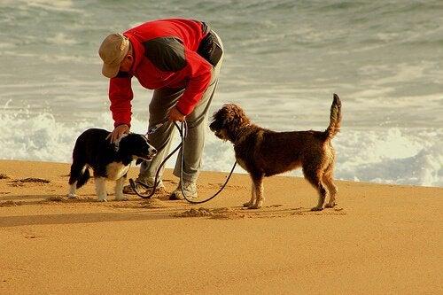 10 tips för att springa med din hund på bästa sätt
