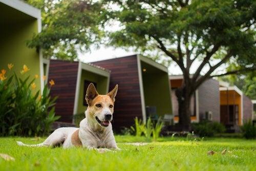 Undvik att skapa problem med din hund