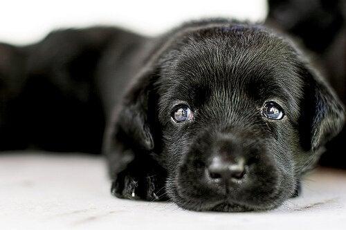 Allt du bör veta innan du väljer att adoptera en hund