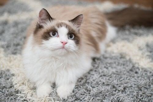 Hur du hustränar din katt på bästa möjliga sätt
