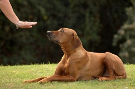 Hund blir tillsagd att stanna