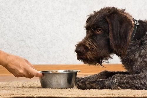 Hund får mat serverad