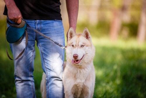 Tips för att bli till den bästa ägaren till ditt husdjur