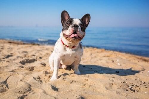 Är havsvatten bra för din hund?