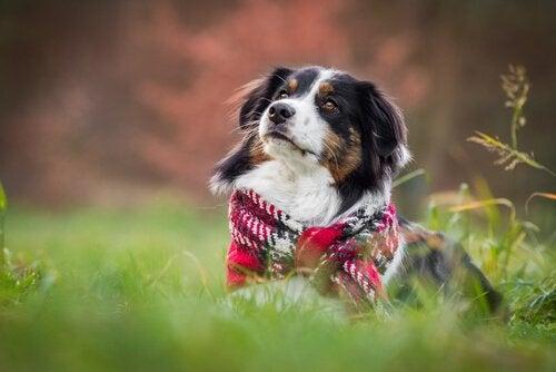 Hundar på vintern: saker man måste ta hänsyn till