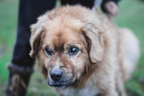 Tips på hur du tar hand om en blind hund