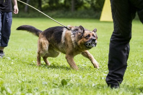 Hur kan man förhindra att hunden blir aggressiv?