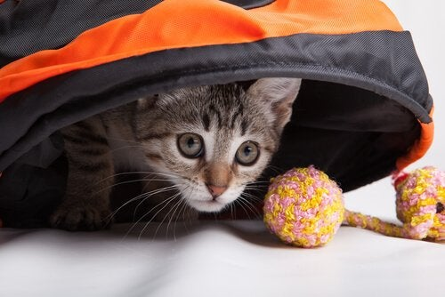 Övningar du kan göra med din katt