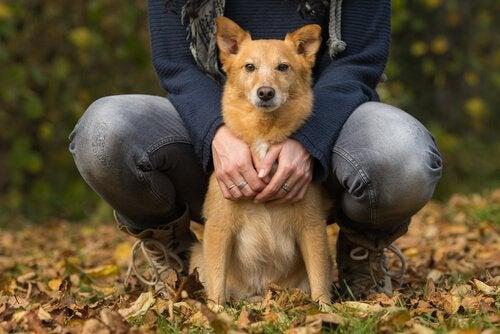 Hjärtsvikt hos hundar: orsaker, symptom och behandling
