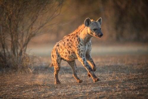 5 olika arter som leds av honor i naturen