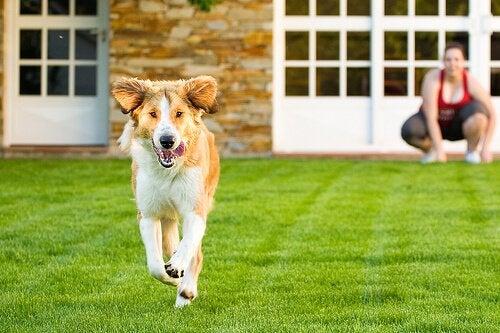 Hur man tränar sin hund att inte springa hemifrån
