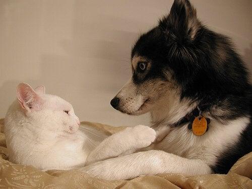Att använda preventivmedel för hundar och katter