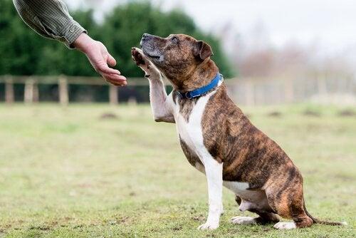 Hur du diagnostiserar dövhet hos hundar