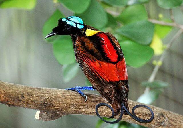 Sex mycket imponerande fåglar i världen