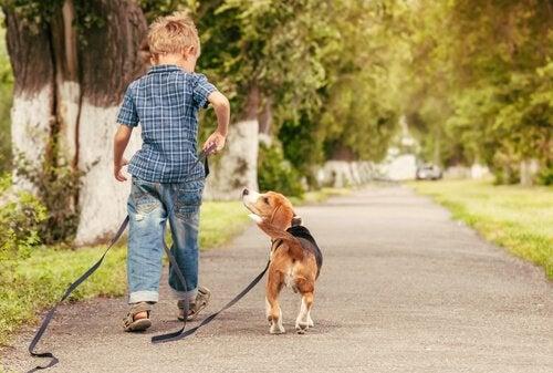 Pojke tar hund på en promenad efter att ha fått ett husdjur i julklapp