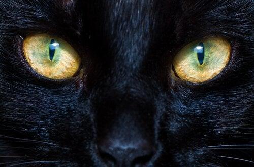 Hur katters och hundars pupiller fungerar