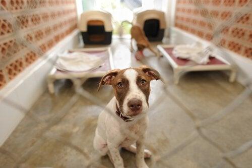 Hund i en kennel